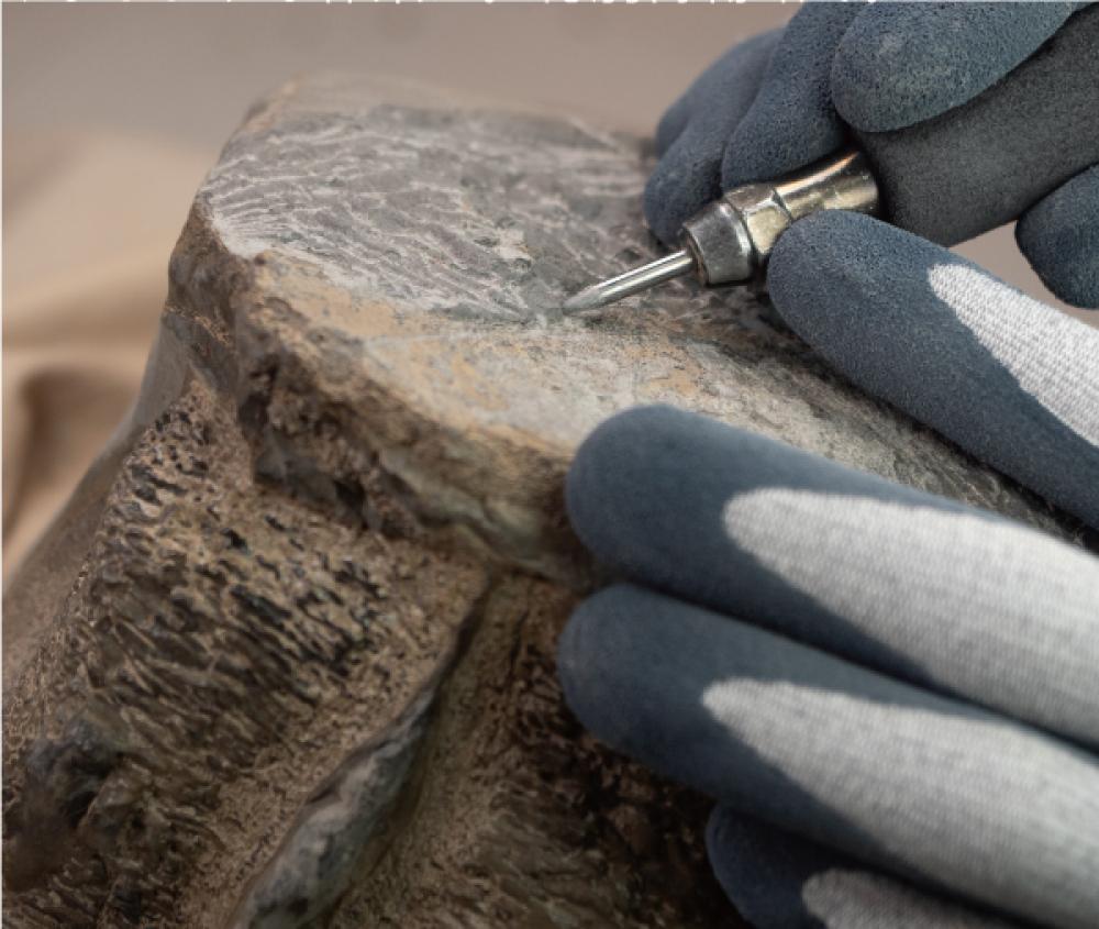 化石が露出しはじめると、作業はさらに気をつかう。